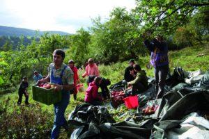 Gartenfreunde mit Apfelkörben