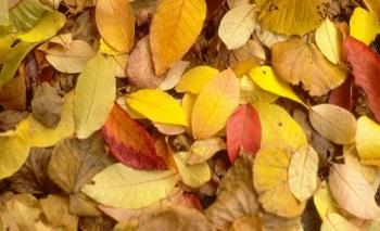 Bunte Herbstblaetter