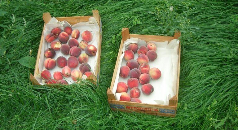 Äpfel in Hannover