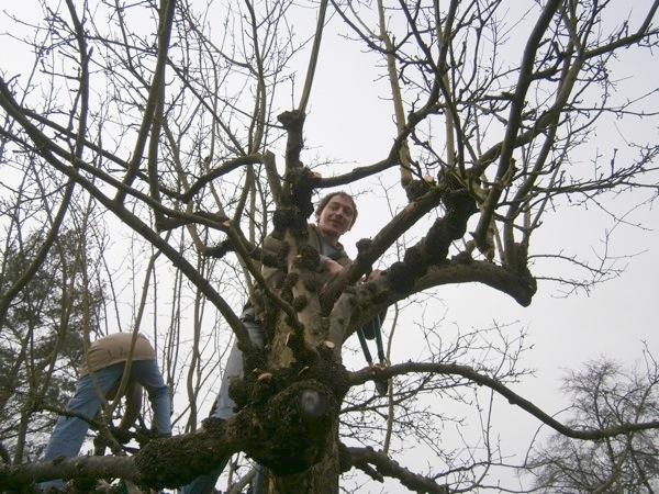 Erntezeit Hannover: Baumschnitt im Gemeinschaftsgarten am Lindener Berg