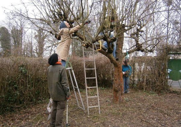 Baumschnitt im Gemeinschaftsgarten am Lindener Berg
